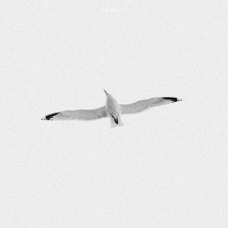 Free-too_Ximeh-Photography.jpg
