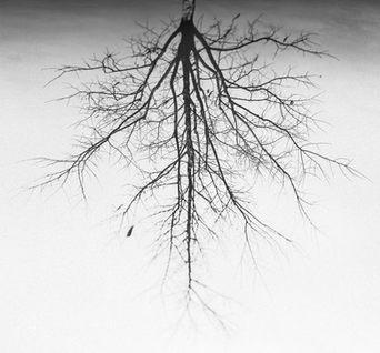 Frankfurt-tree-2_Ximeh-Photography.jpg