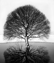 Trees-VRiabovol_SAM7089.jpg