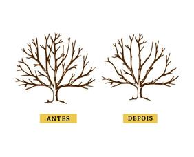 Poda de raleamento e a manutenção estrutural das árvores