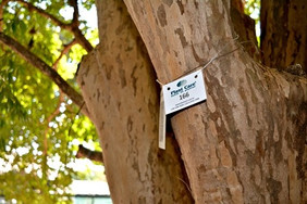 Plant Care realiza inventário arbóreo para a EAC