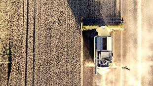 China Slaps Australian Barley Farmers With 80% Tariffs For Five-Years