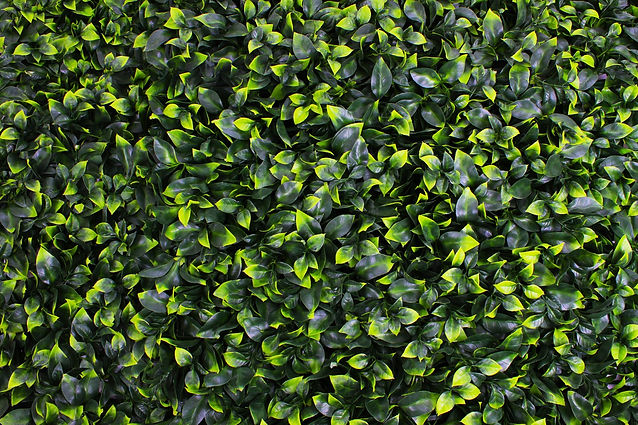artificial gardenia greenery panel Installation Picture