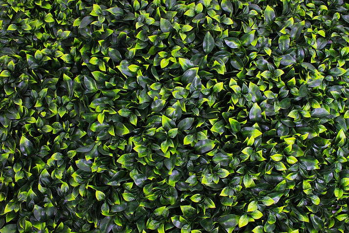 Artificial Gardenia Greenery Panel Installation Shot