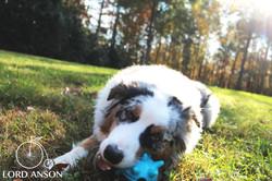 Rambo Blue Snack Puzzle Ball Grass