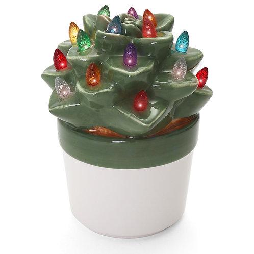 Echeveria Succulent with Multicolored Lights