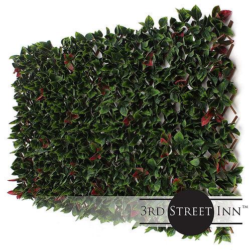 Red Tipped Photinia Greenery Trellis Main Image
