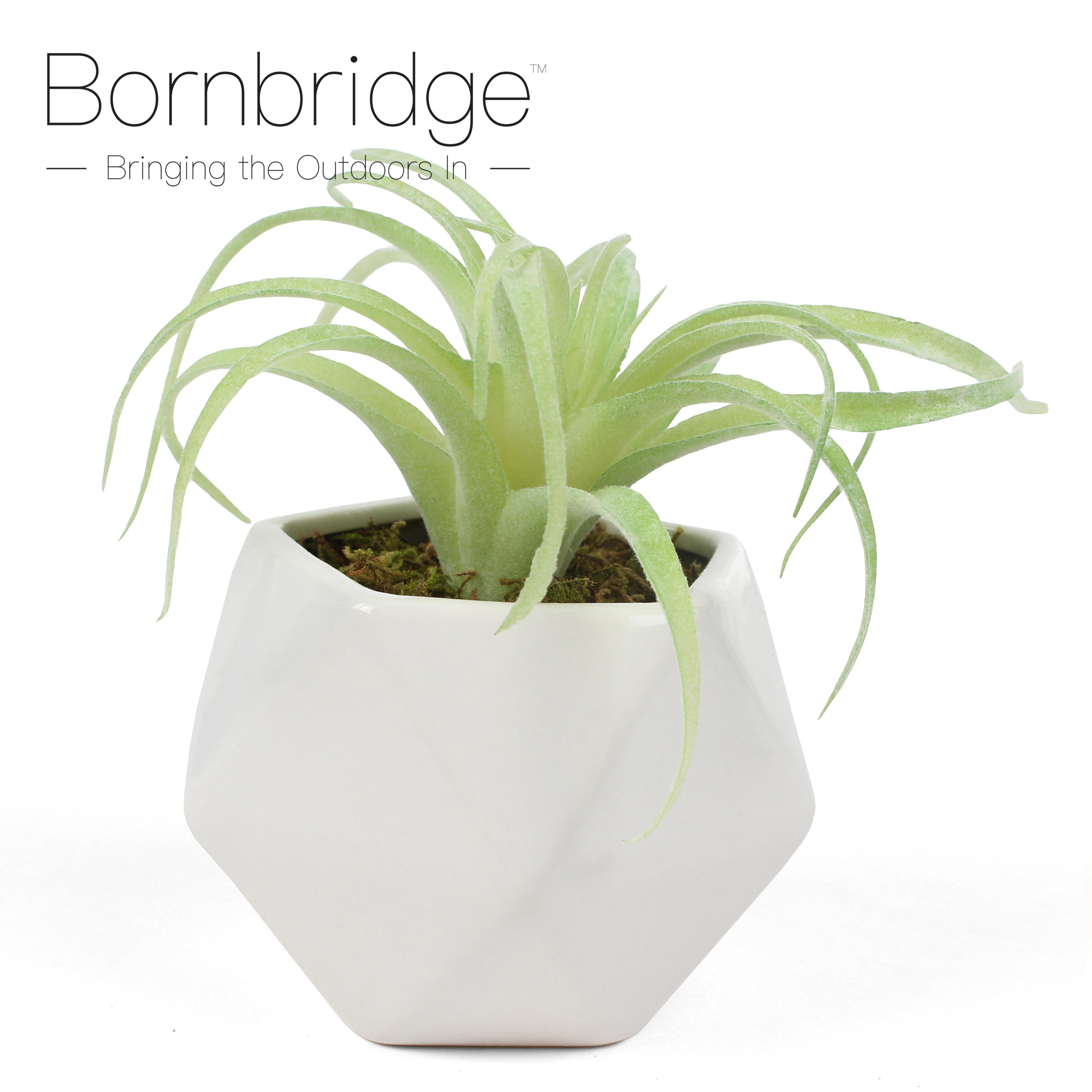 Tillandsia Artificial Succulent Bornbridge