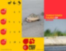 Geometric Themed Wildlife Brochure.jpg