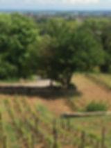Wijnreizen Frankrijk   Bourgogne   Fete du Vin