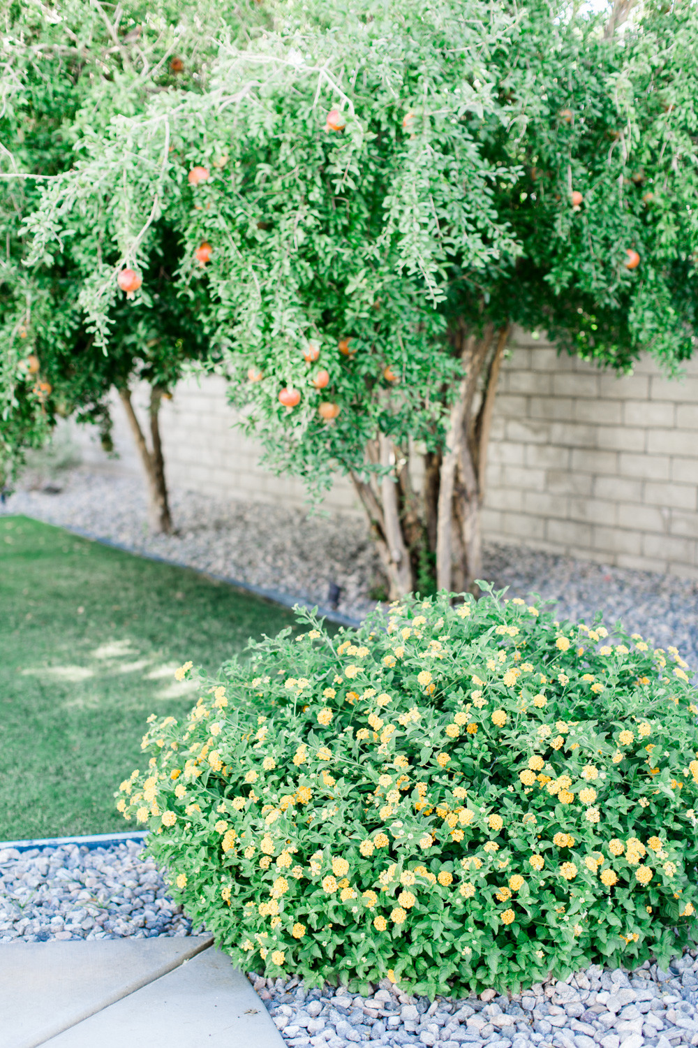 Engagement photos: Modern Palm Spring Engagement Session
