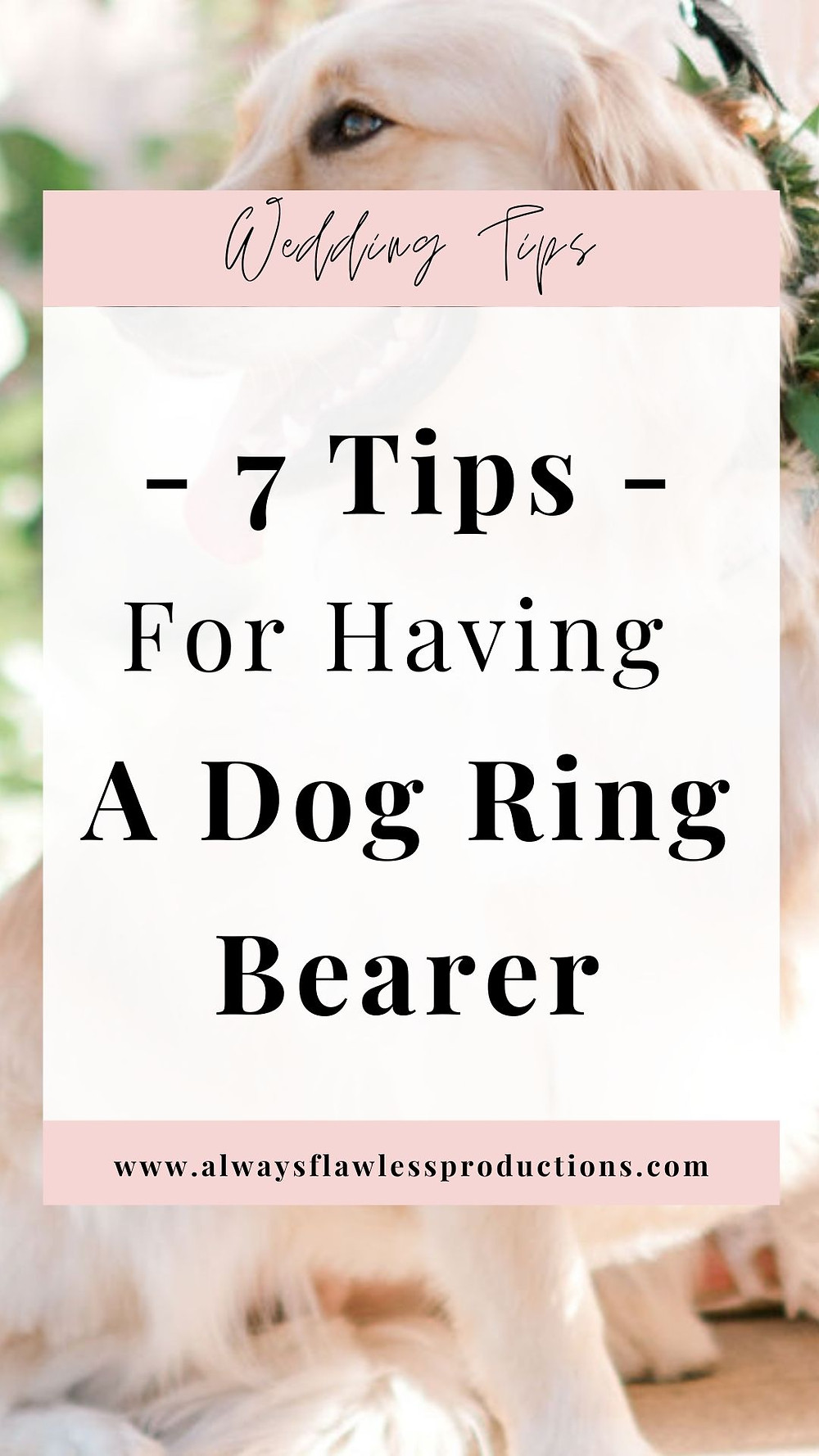 7 Tips For Having A Dog Ring Bearer