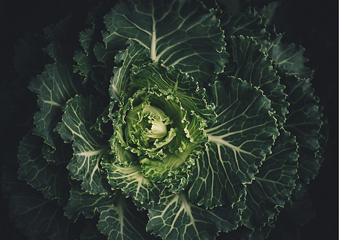 cabbage Fresh Frontier.png