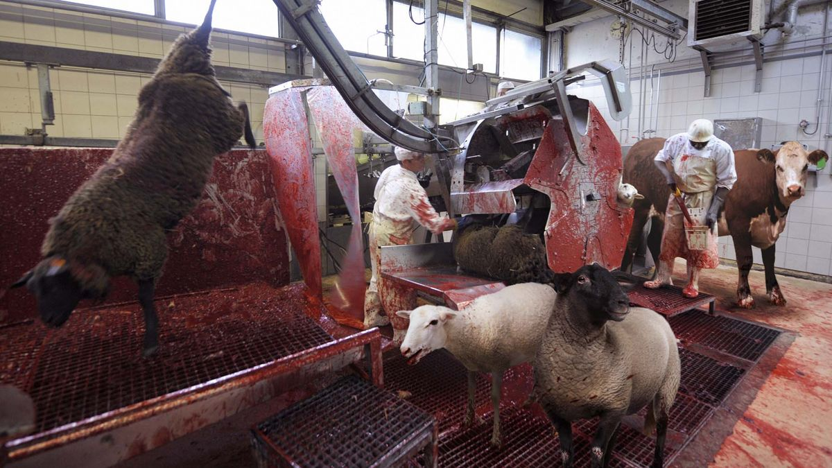 Exceptional The Meatpacking Industry; Or, Hell On Earth | Notes Of An Underground  Humanist   HOME
