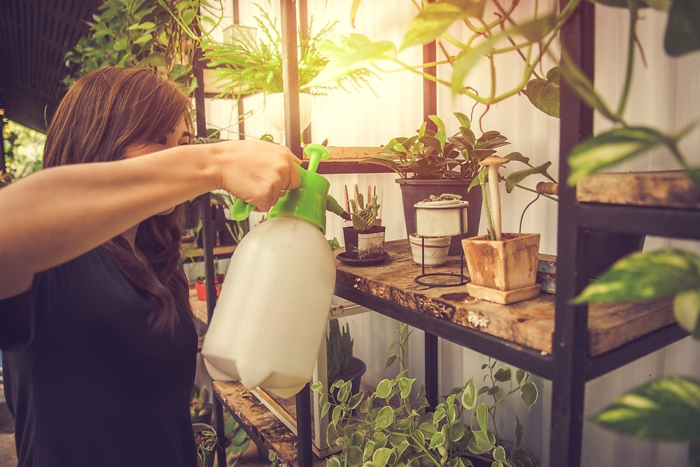 A person watering indoor plants