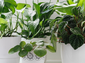 Beginners Guide to Propagating Plants