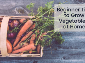 5 Beginner Tips to Grow Vegetables at Home