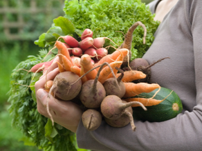 5 Tips to Plant the Perfect Vegetable Garden