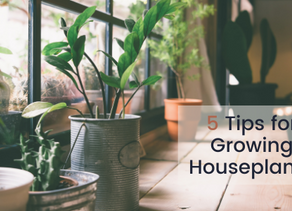 5 Tips for Growing Houseplants | Boomerang