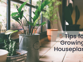 5 Tips for Growing Houseplants