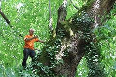 Kletterausrüstung Baum Fällen : Mytree Über uns