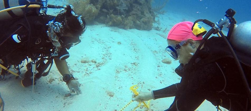 divermojo-dive-coral-measuring.jpg
