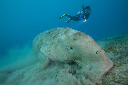 diverMojo_eco_diving.jpg