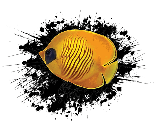 maldives-yellow-fish-02.png