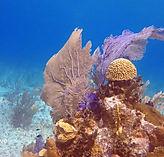 little_cayman_scuba_diving