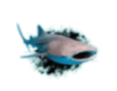 whale-shark.png