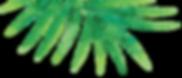 leaf-top-left.png