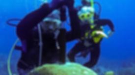 little-cayman-web-07.jpg
