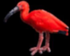 bird-02.png