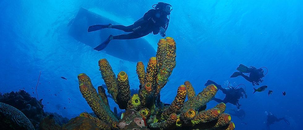 Divermojo_Bonaire_conservation_scuba_Div