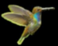 bird-03-alt.png