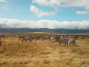 Sunset Adventure Safari Ngorngoro crater