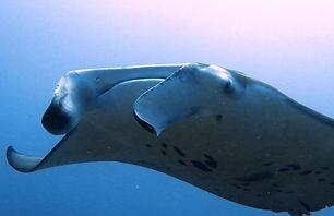 maldives-scuba-diving_edited.jpg