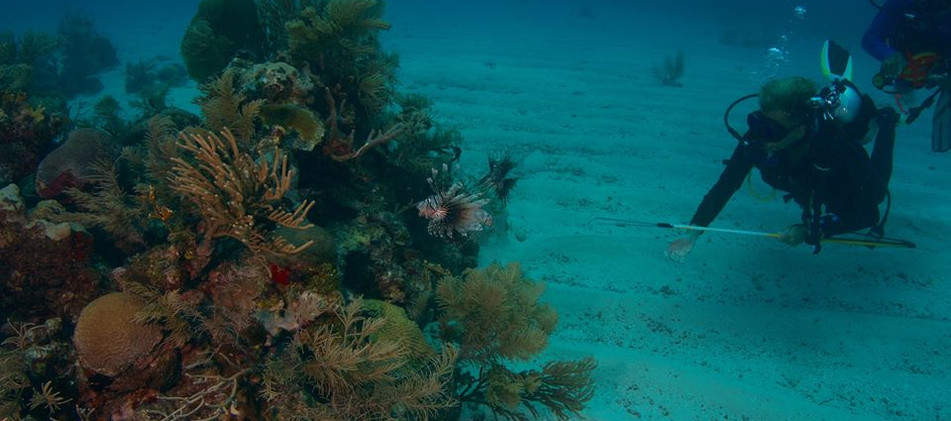 divermojo-lionfish.jpg