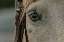 Azur - cheval aux yeux bleus