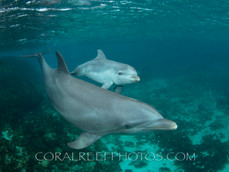 BAR-2575_baby-dolphin.JPG