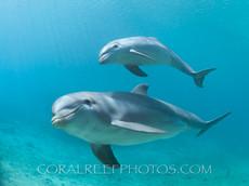 BAR-2577_baby-dolphin.JPG