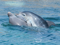 BAR-2567_baby-dolphin.JPG