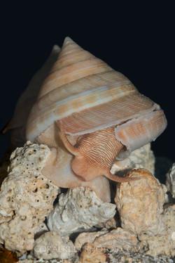 BAR-3691_slit-shells