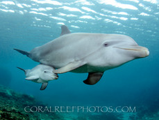 BAR-2571_baby-dolphin.JPG