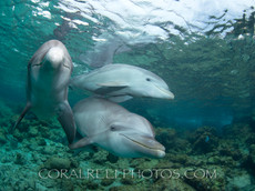 BAR-2584_baby-dolphins.JPG