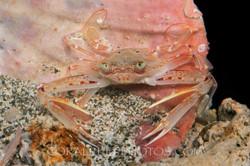 BAR-3715_crab