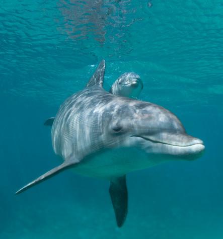 BAR-2588_baby-dolphin.JPG