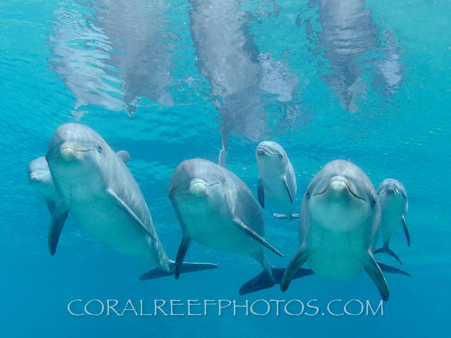 BAR-2591_baby-dolphins.JPG