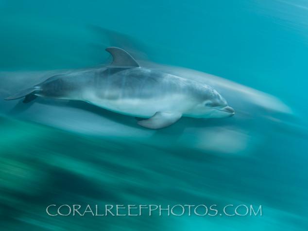 BAR-2574_baby-dolphin.JPG