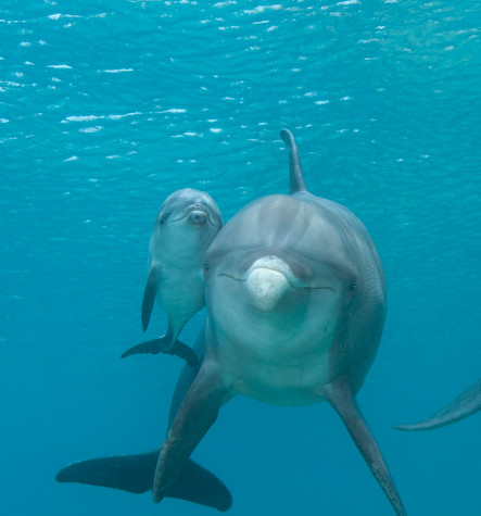 BAR-2592_baby-dolphin.JPG